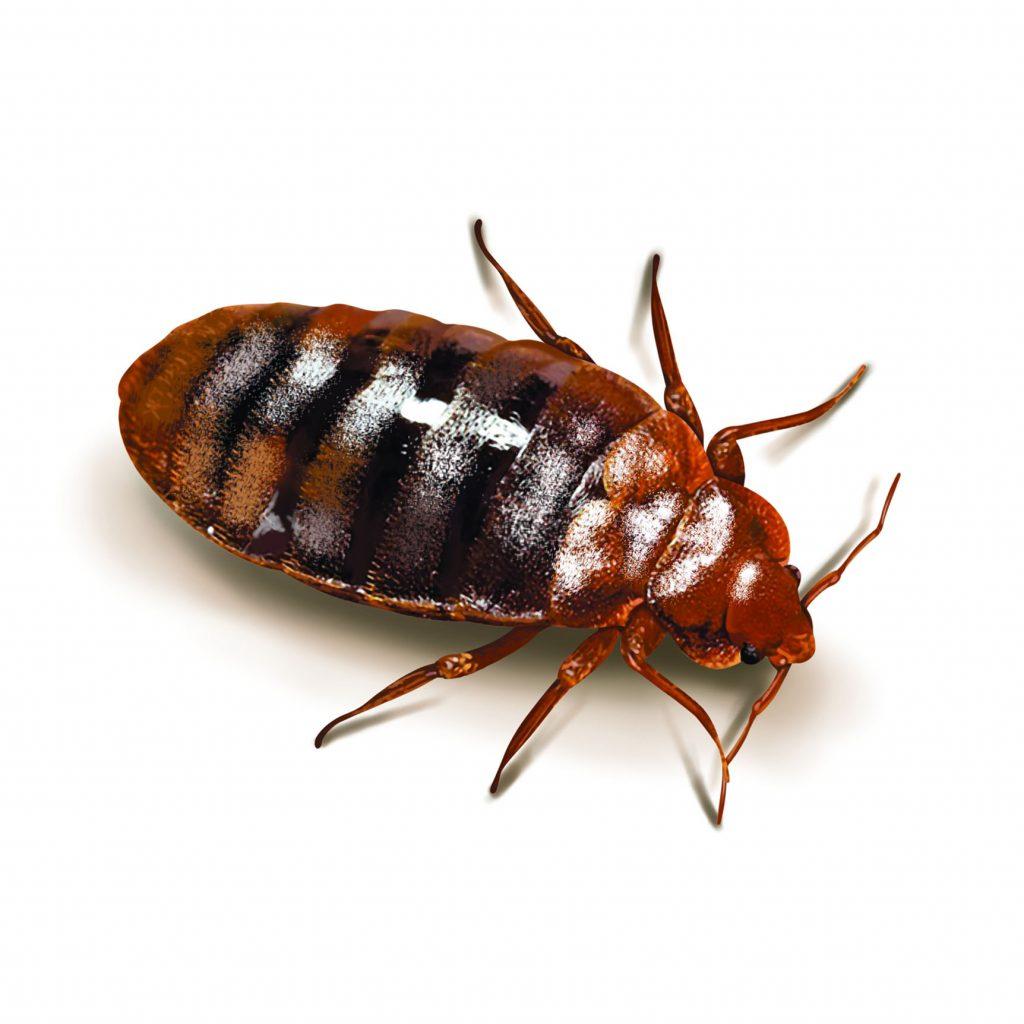 bed-bug-pest-control-exterminator-pasco
