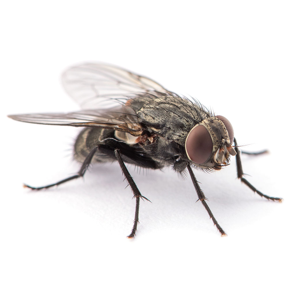 Fly pest control pasco county