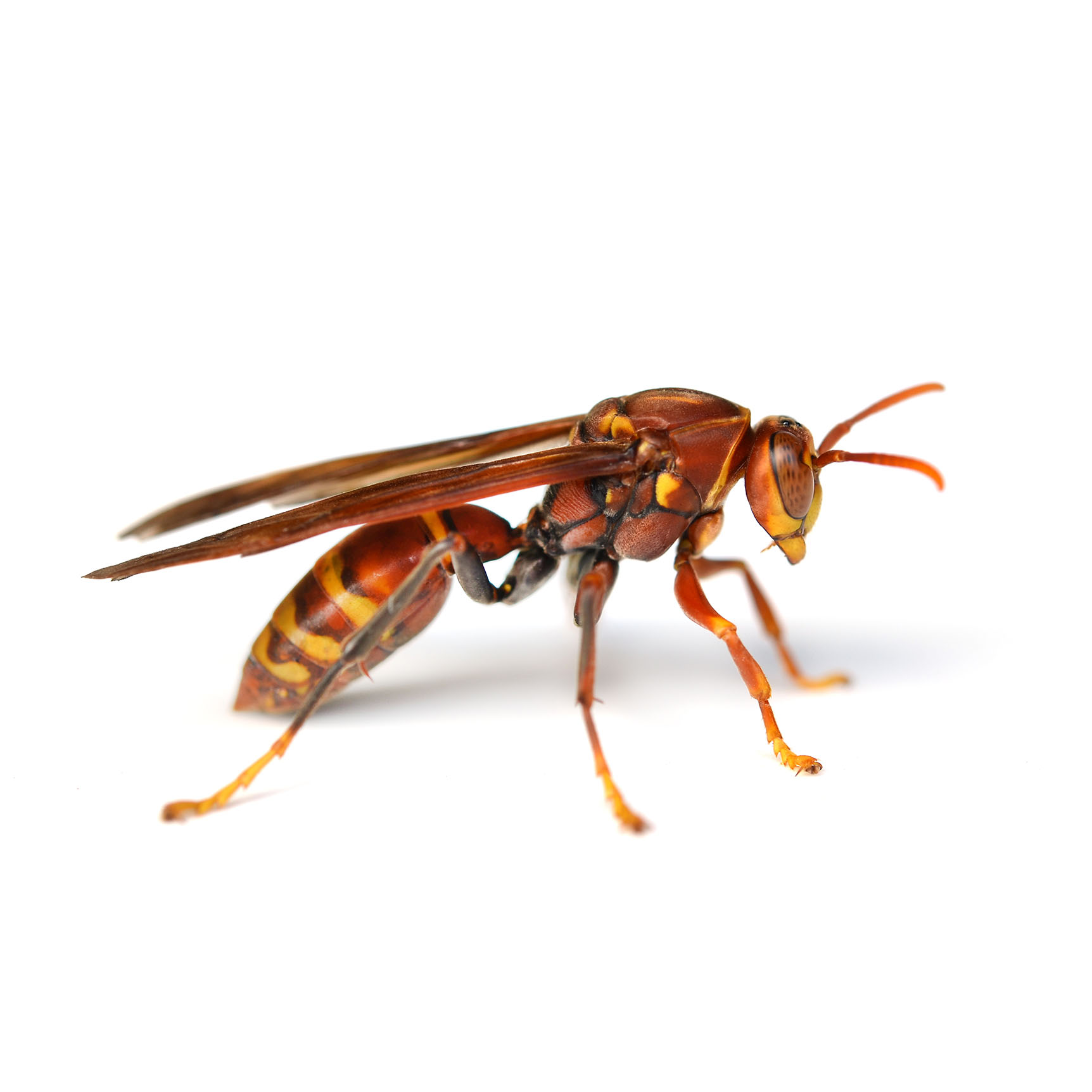 Wasp pest control pasco county